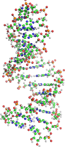 messenger RNA credit: Wikimedia Commons
