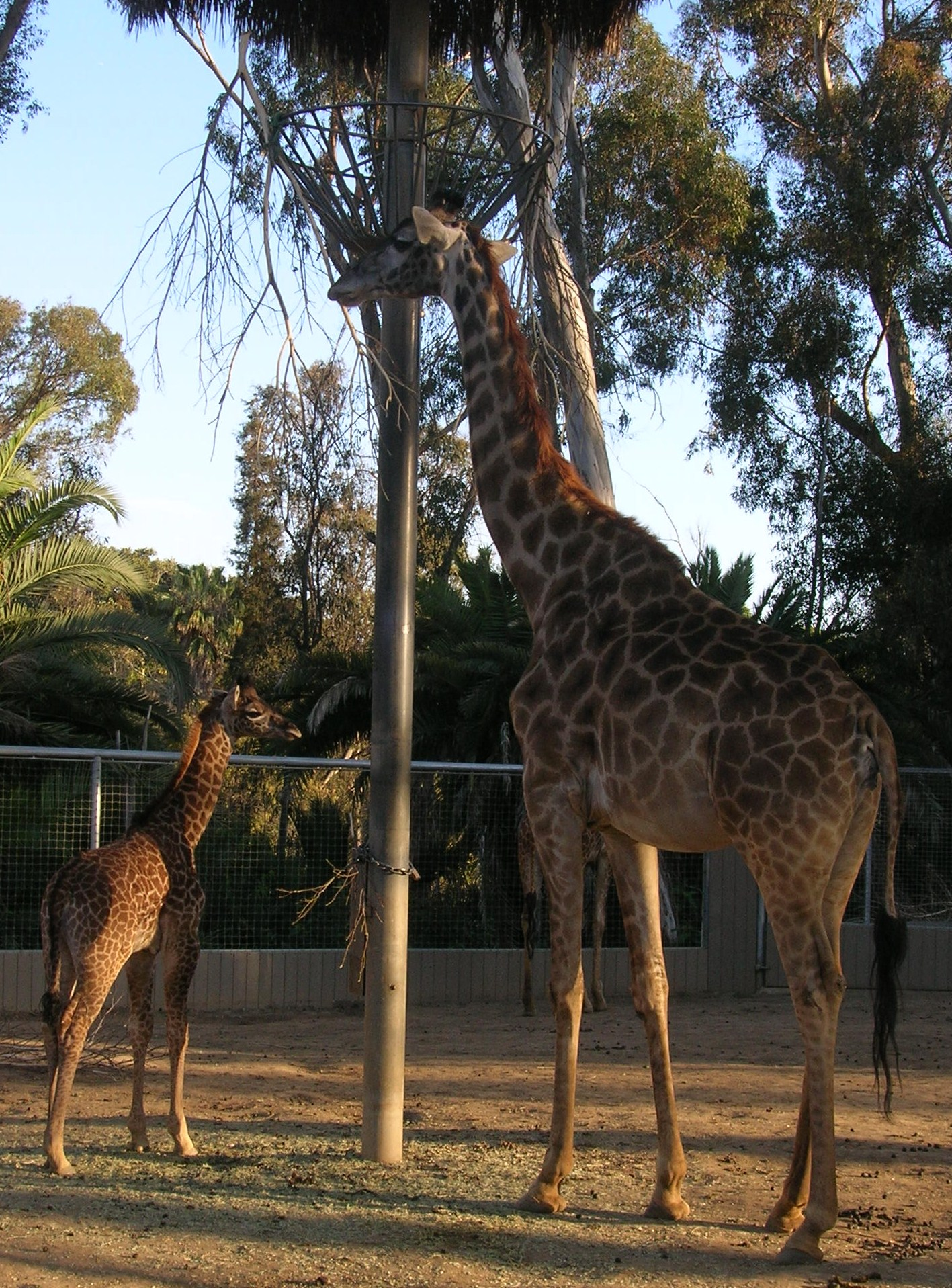 San Diego Zoo mother & baby snapshots