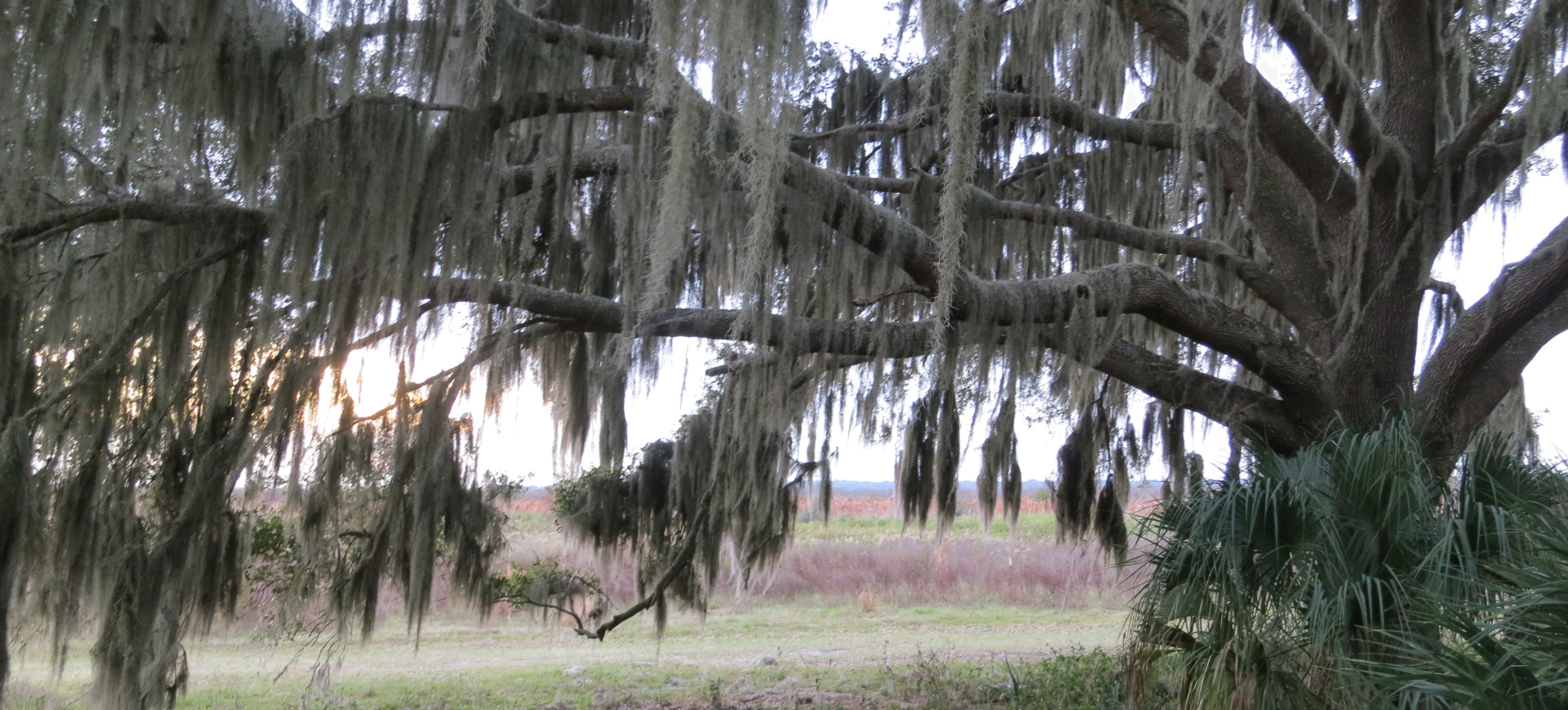 Alligators, Spanish moss, and a sense of wonder
